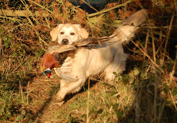 Brook with Pheasant