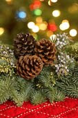 Click on the pine cones to see my Christmas blog!
