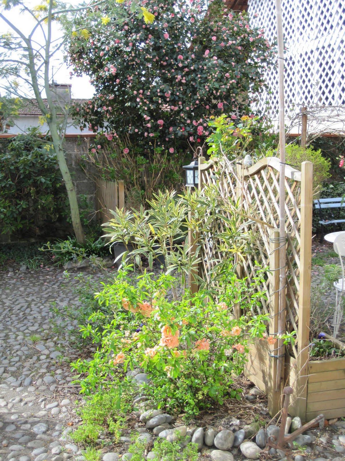 matin lumineux enfin des fleurs dans le jardin. Black Bedroom Furniture Sets. Home Design Ideas