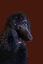 Cooper my dog