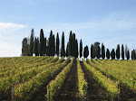Vines &amp; Cypress