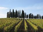 Vines & Cypress