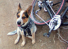 Sprocket the Trail Dog