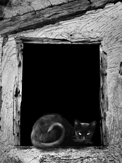 Demare fotografia fotografias en blanco y negro - Fotos en blanco ...