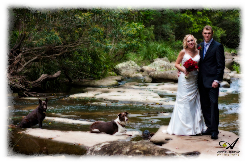 Fine For Dogs In National Park Nsw