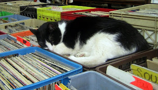 The Very Best Places for a Cat Nap Seen On  www.coolpicturegallery.us