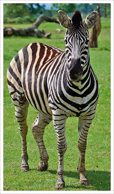 Awesomely Beautiful Animal Portrait Seen On  www.coolpicturegallery.net