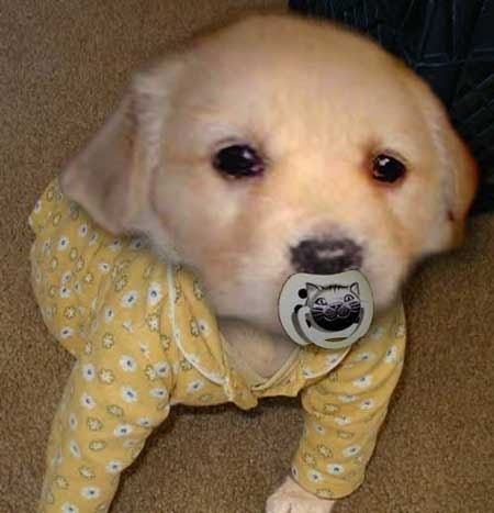 images of baby dogs - photo #13