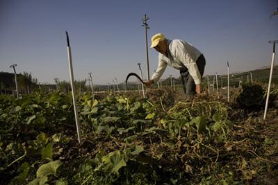 Lagatera agricultura ecol gica versus agricultura for Rotacion cultivos agricultura ecologica