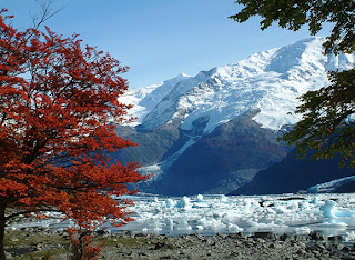 calafate1 Argentinian excursions: Perito Moreno and other glaciers