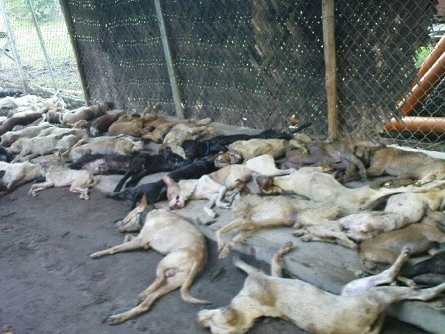 daily animal welfare news dawn 59 dead dogs buried in akf center