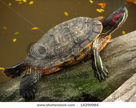 More Than A Thousand Fresh Water Turtles Saved! Daily Animal Welfare ...