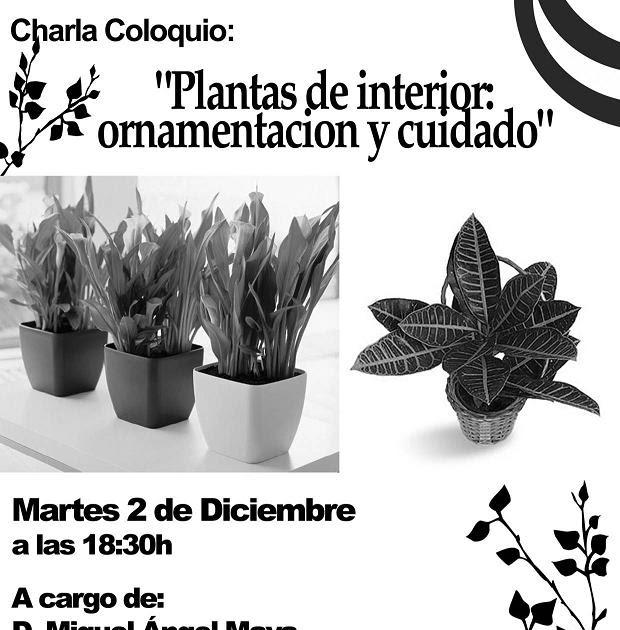 Blog Ateneo Andaluz Charla Coloquio Plantas De Interior