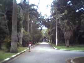 Jardim Botanico da Cidade de Santos