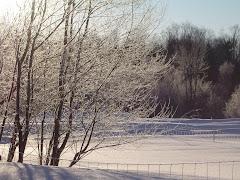 L'hiver et ses merveilles
