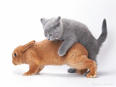 Sexy  Animals