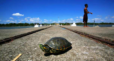 A turtle is seen on a jetty in Cocibolca lake at the colonial city of Granada, some 29 miles south of Managua