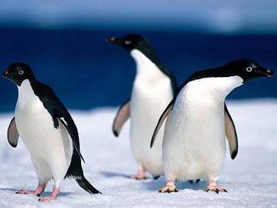 Cute Penguins