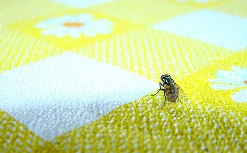 Tips para ahuyentar moscas - Como espantar moscas ...