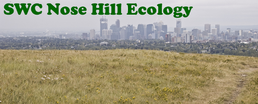 SWC Nose Hill Ecology