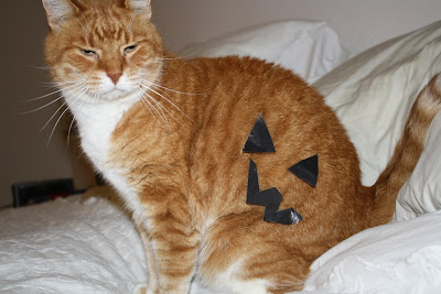 jack o' cat