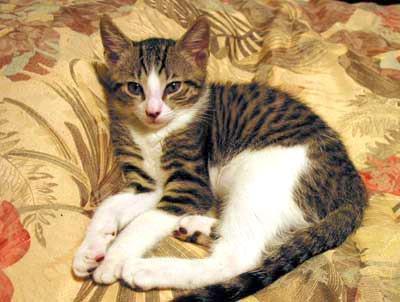 cheshire cat blink182
