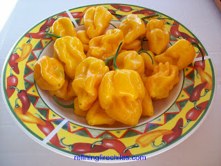 Trinidad Scorpion seeds| Yellow 7 Pot seeds| www.superhotchiles.com