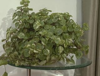 Feng shui plantas curadoras en el interior for Feng shui plantas dentro del hogar