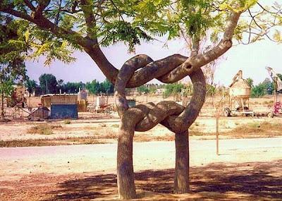 strange and funny trees 54 Pohon Aneh Yang Tumbuh Di Tempat Aneh
