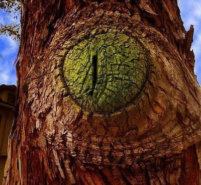 strange and funny trees 39 Pohon Aneh Yang Tumbuh Di Tempat Aneh