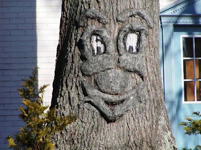 strange and funny trees 33 Pohon Aneh Yang Tumbuh Di Tempat Aneh