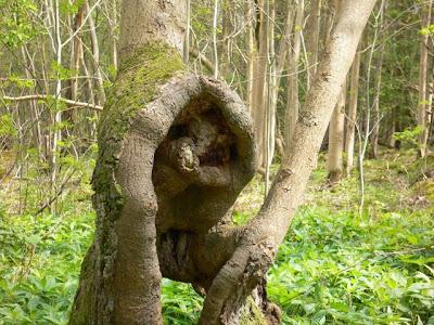 strange and funny trees 32 Pohon Aneh Yang Tumbuh Di Tempat Aneh
