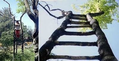strange and funny trees 21 Pohon Aneh Yang Tumbuh Di Tempat Aneh