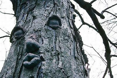 strange and funny trees 10 Pohon Aneh Yang Tumbuh Di Tempat Aneh