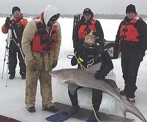 SHARK VINDICATION!