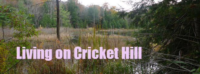 Living on Cricket Hill