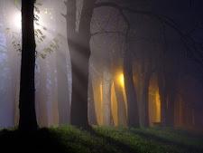 La FORET et ses MYSTERES