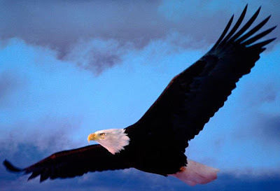 zeus symbol eagle - photo #8