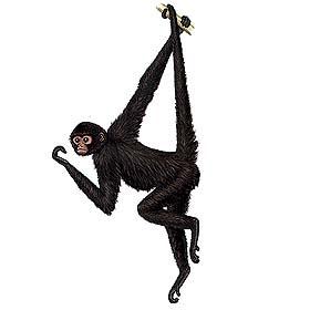 mono araña negro Ateles paniscus