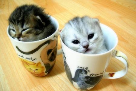 [kittens+in+cups]