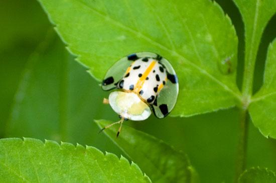 [cutest+bug]