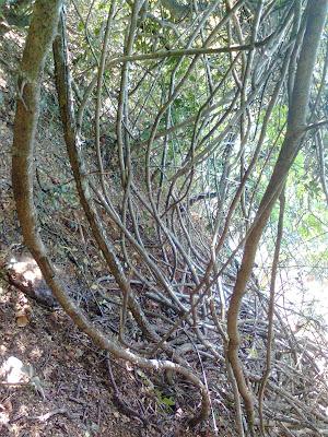 Phansad Wildlife Sanctuary - dense jungle