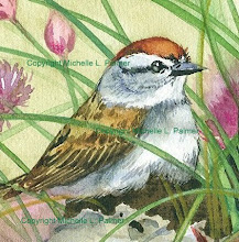 Chipping Sparrow...