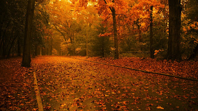 Fallen Brown Leaves on Road HD Autumn Wallpaper