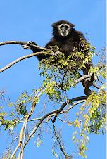 Climbing Monkeys