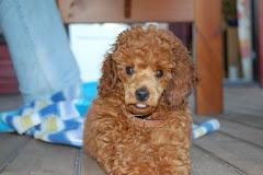 Rambo - Hunden min