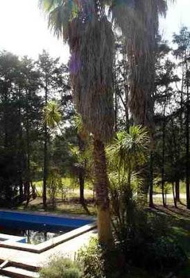 Árboles del parque de la quinta en Buenos Aires