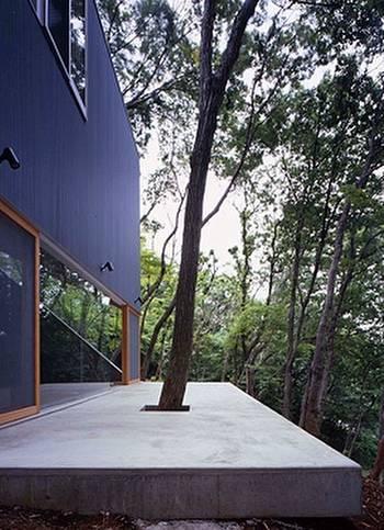 Terraza con árbol del terreno