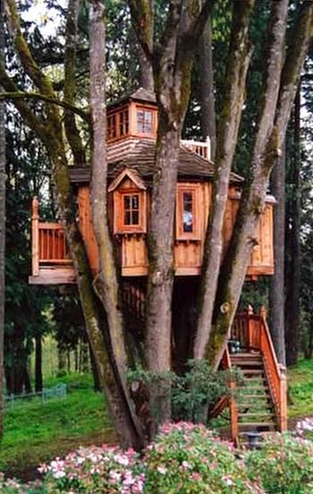 Casa de los árboles