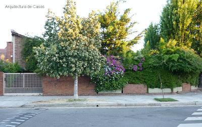 Árbol florecido y cerco de flores